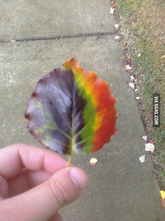 Rainbow Leaf!