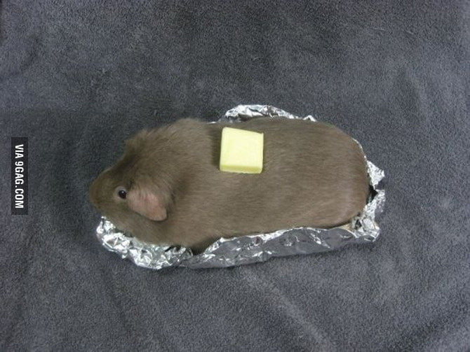 A guinea pig pretending to be a baked potato.