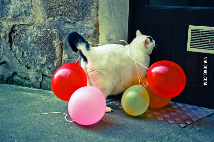 Is it party time? I brought a few balloons.