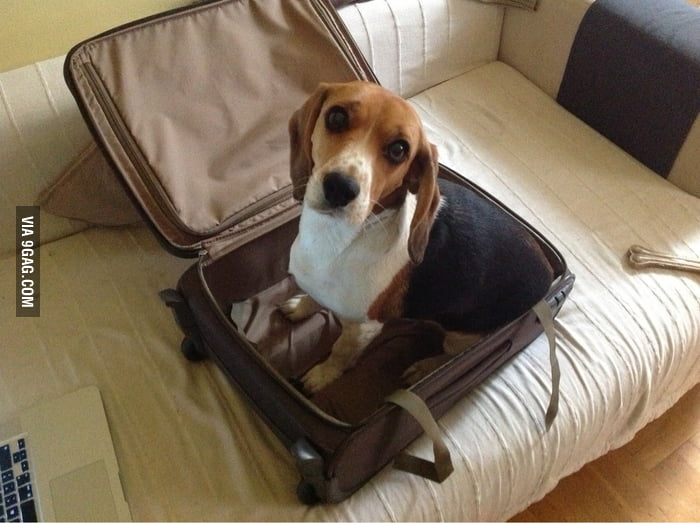 Can I go with you?