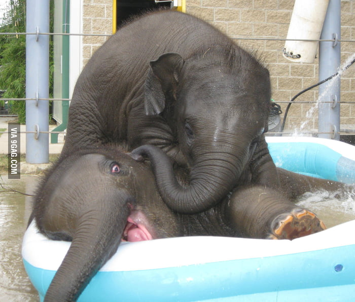 2 young elephants playing in a small pool.