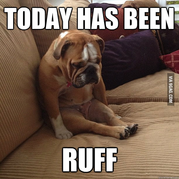 Poor little guy has a ruff day.