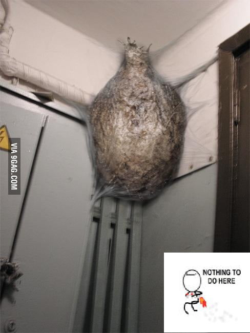 Spider / old wasp nest?