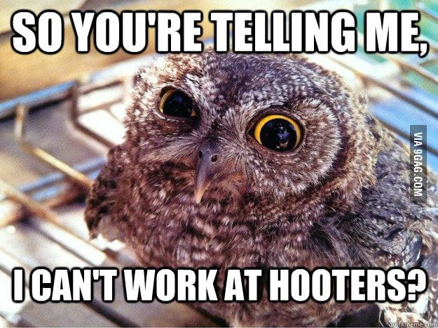 Skeptical owl on job hunting
