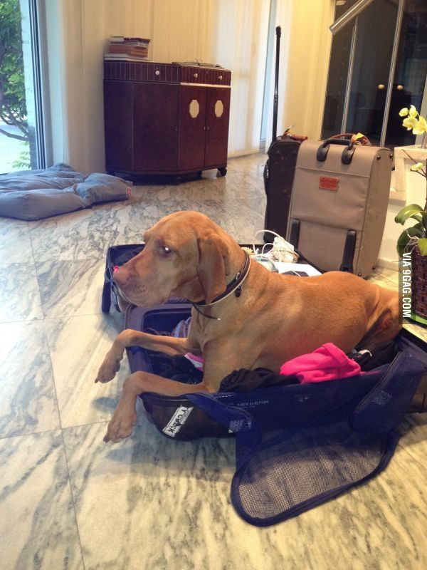 Every time my friend is packing for trips.