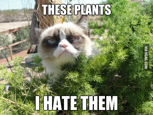 Grumpy cat goes outside.