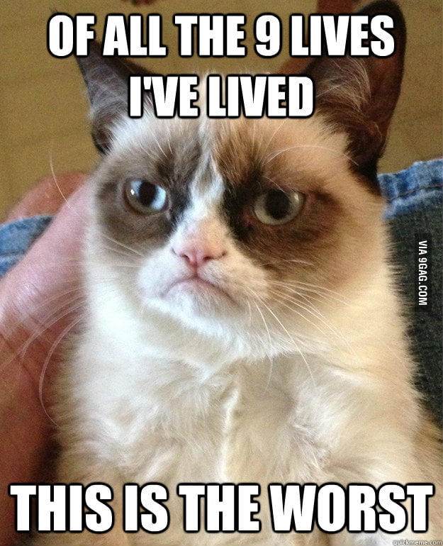 Grumpy cat on living