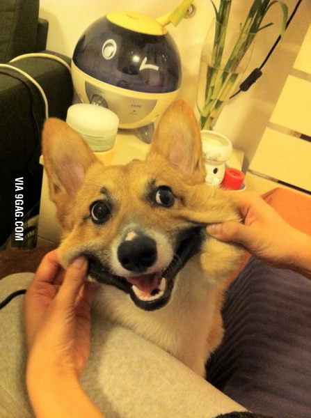 I do this to any dog that will let me