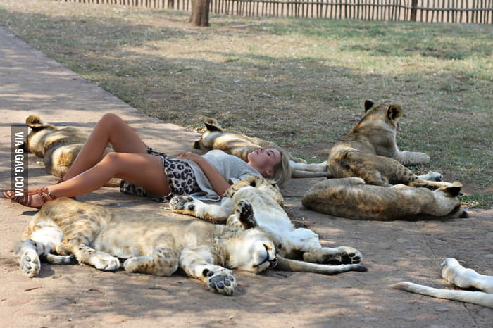 Sleeping with lions