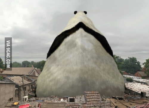 Panda you said ? How about a HUGE one ?