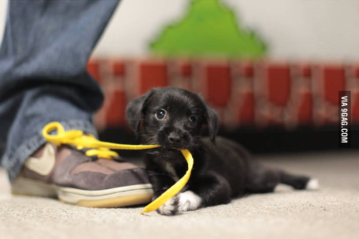 I can haz shoelace?