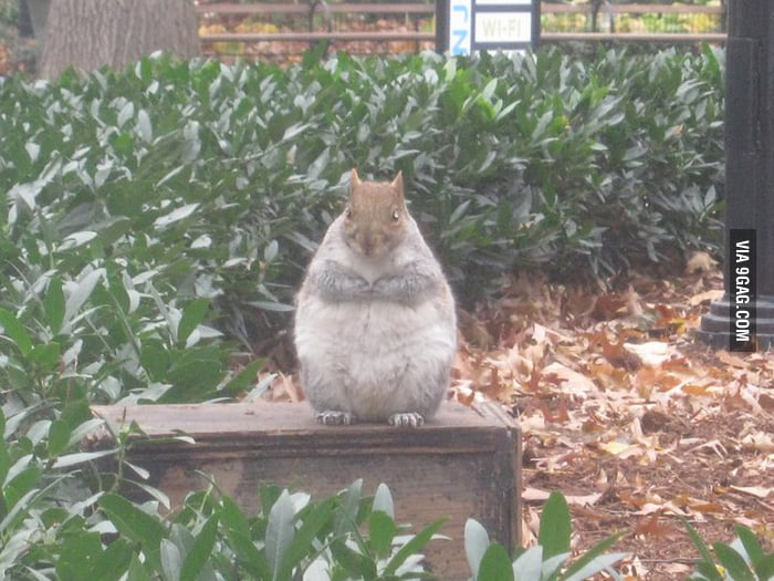 Fattest squirrel you've ever seen