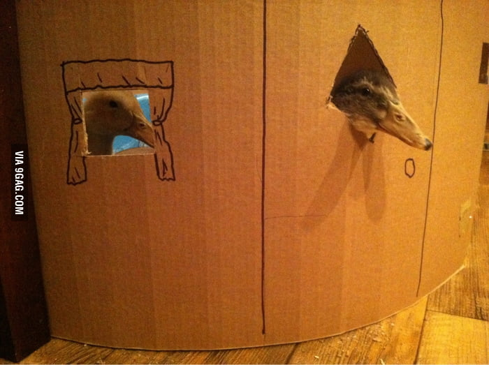 Made a cardboard house with windows for my ducks.