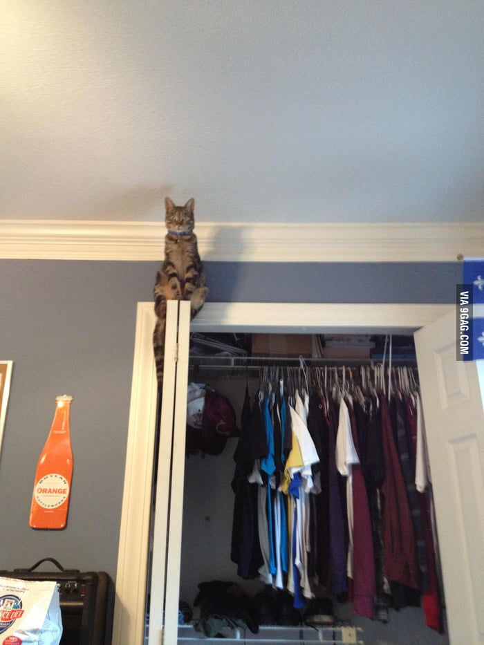 I think my cat watches me play too much Assassin's Creed.