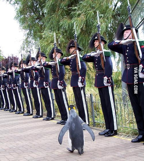 Colonel Penguin