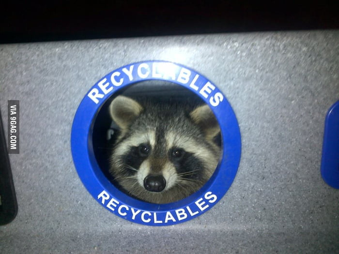 Saw this guy in the garbage bin.