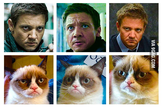 Hawkeye (Jeremy Renner) looks alike Grumpy Cat!