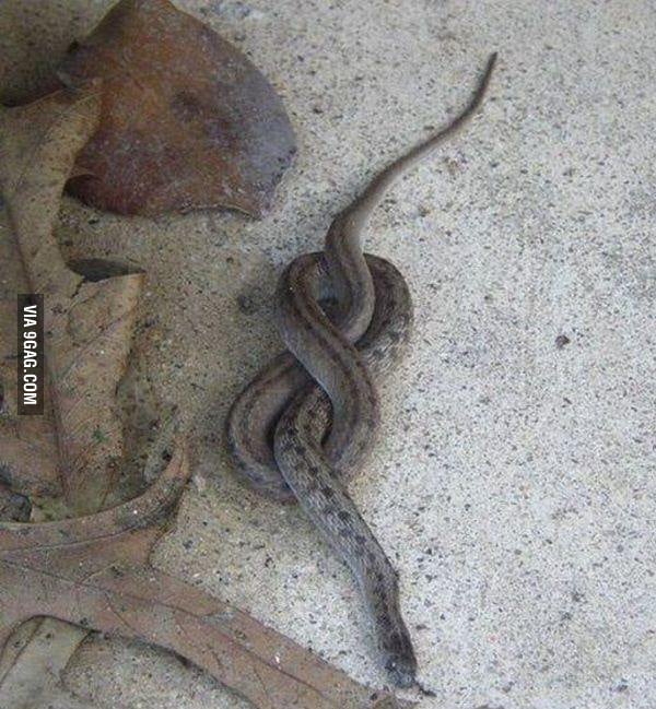 Go home snake, you are drunk