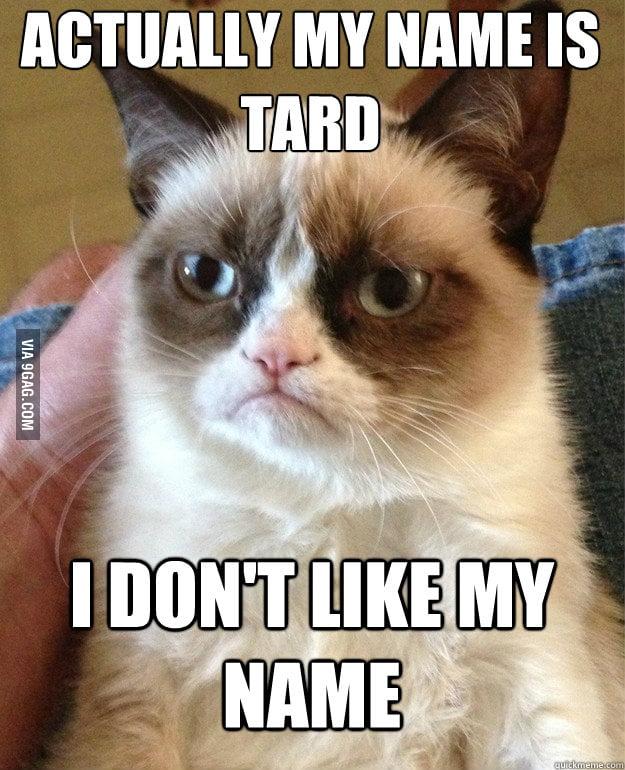 Grumpy Cat is grumpy as always