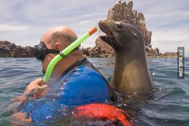 Troll Seal