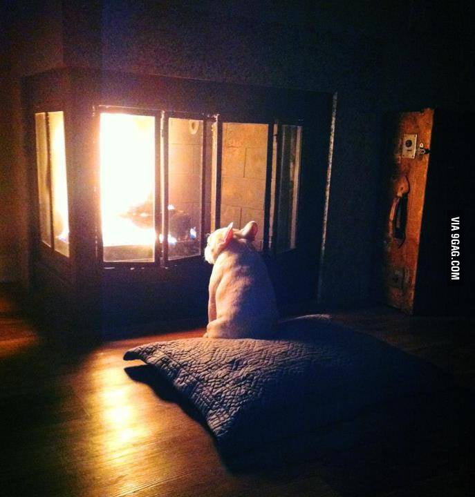 Some dogs just want to watch the wood burn.