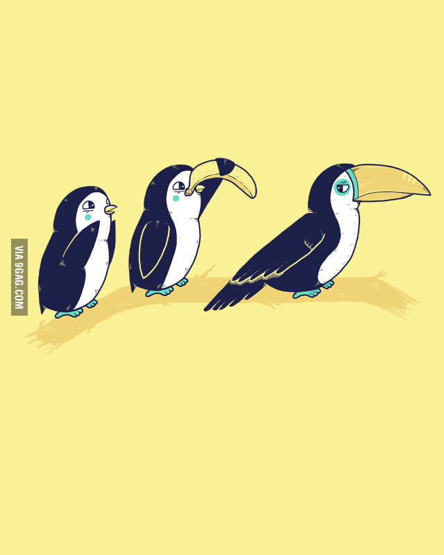 Penguins and Toucan