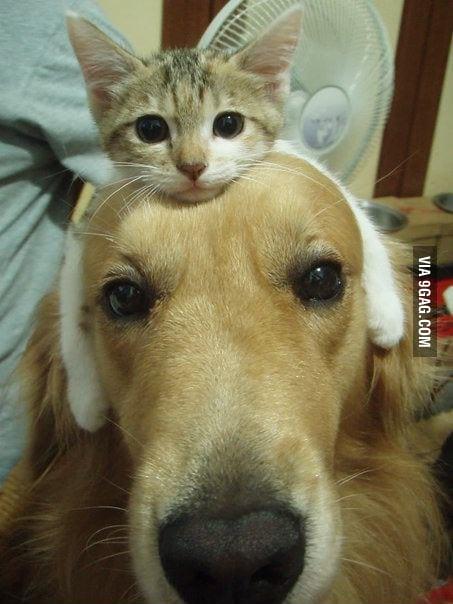 Just my cat riding my dog...