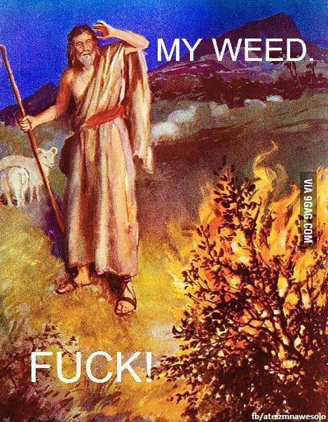 MY WEED!