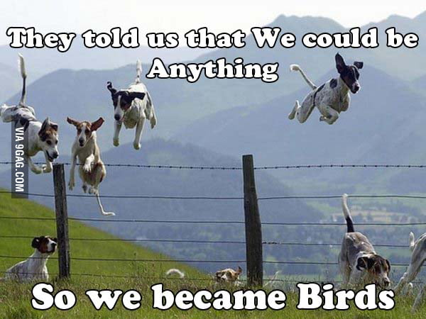 B**ch, We are Birds!!!