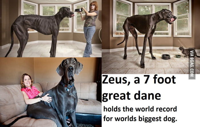 Worlds largest dog