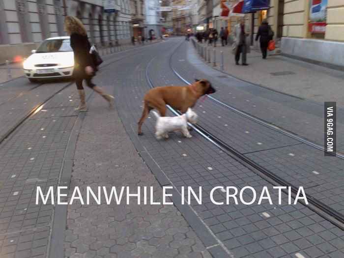 Nothing interesting, walking my dog across the street