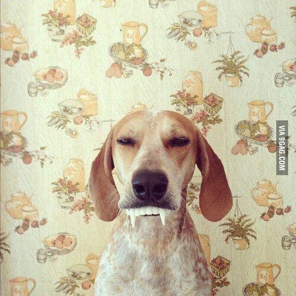 My Vampire Dog