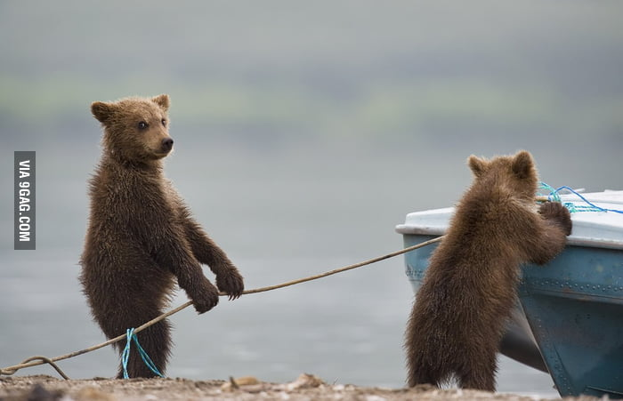 The bears are stealing the boat!