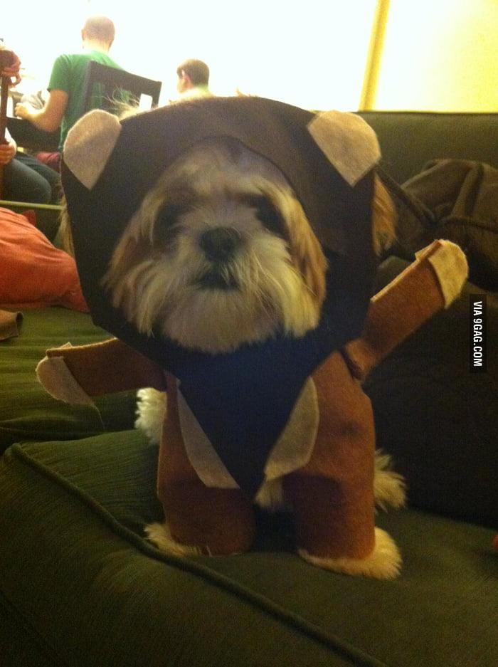 Puppy Ewok