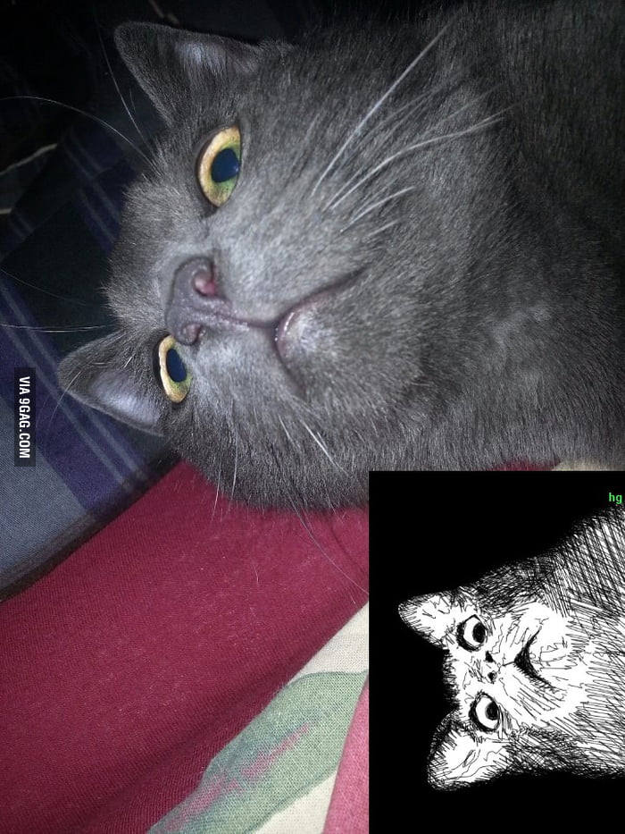 My cat reminds me of something