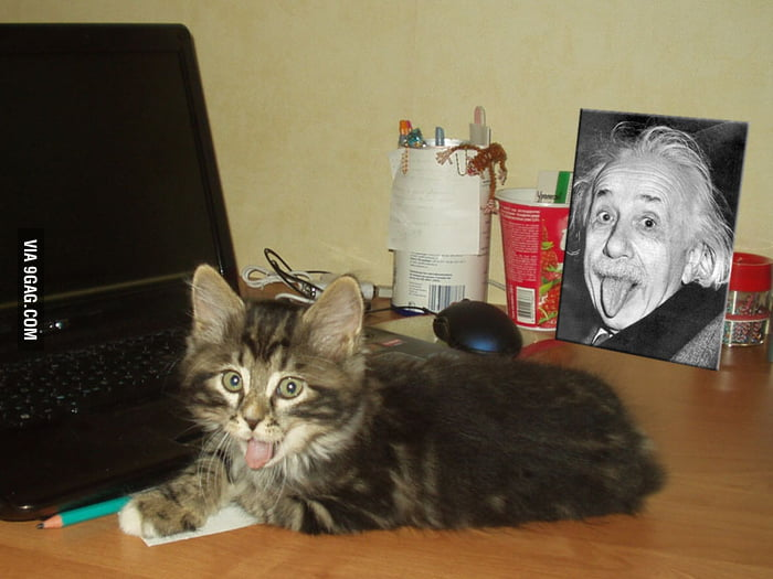 Albert Einstein's cat!