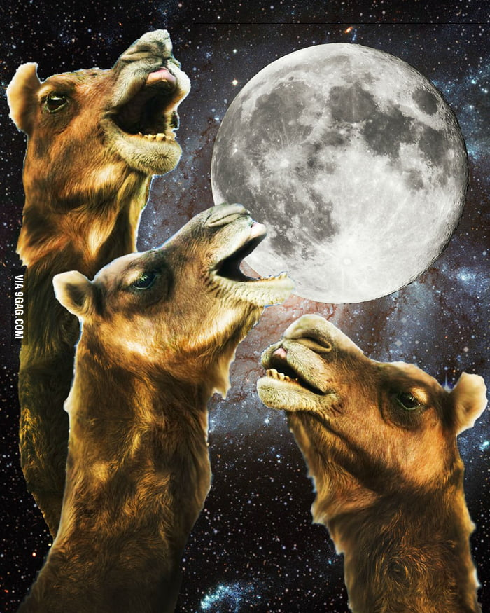Three Camels Moon
