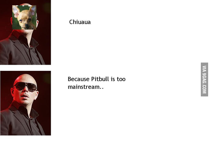 Because Pitbull is too mainstream..
