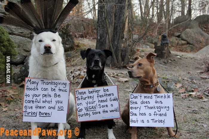 Thanksgiving tips from the local pet rescue