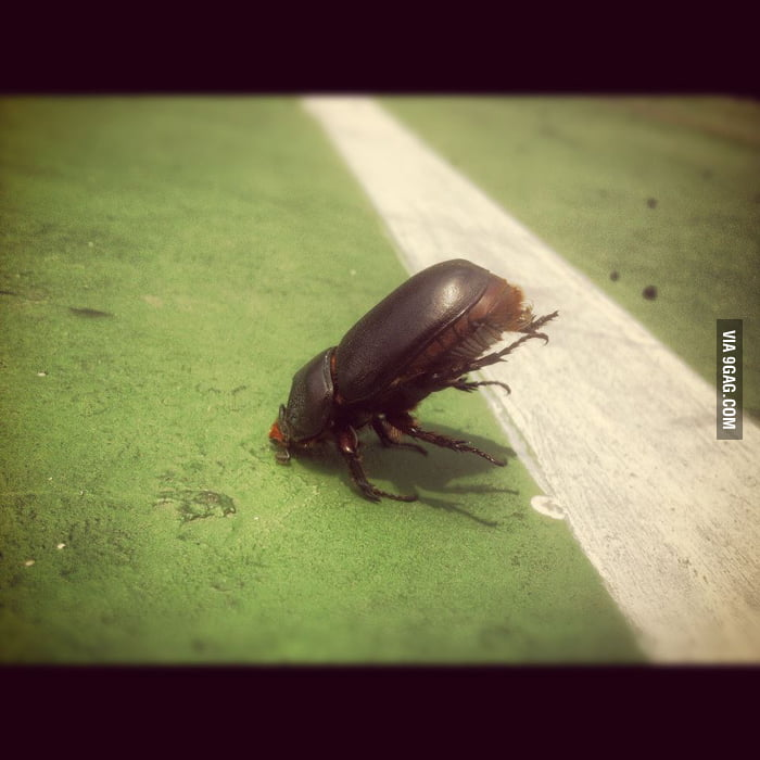 Go home beetle, you're drunk!