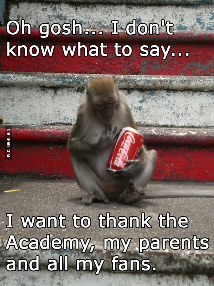 Award winning monkey