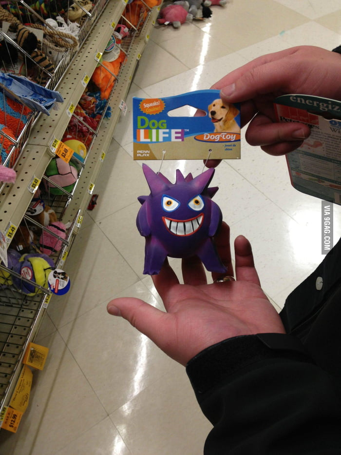 This pet toy looks familiar.