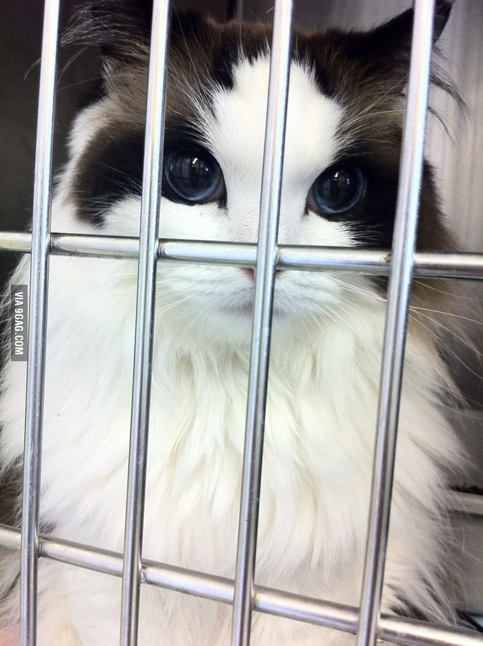 This cat is prettier than most humans.