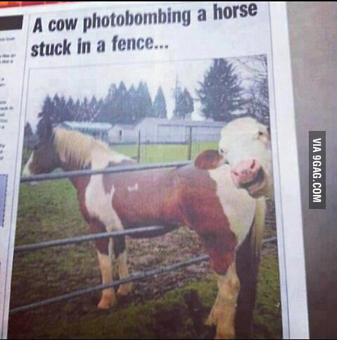Best photobomb ever!