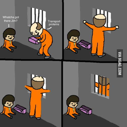 Because it's a CELL WALL