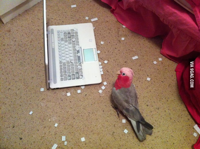 Never put your bird and notebook alone in the same room.