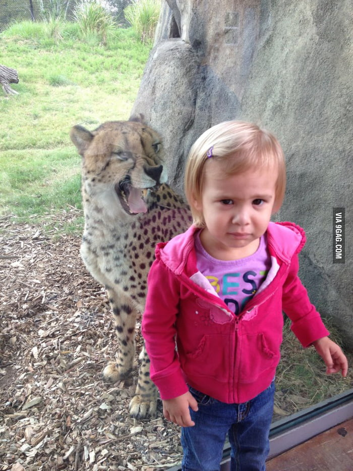 The cheetah wasn't very pleased to take a photo with her.