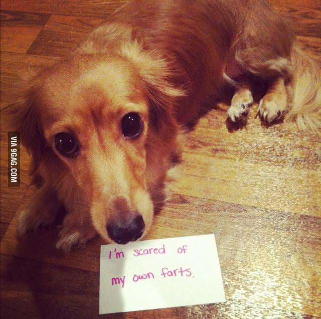 This dog got a serious problem.