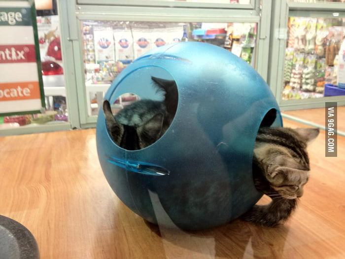 Who wants a ball of cats?