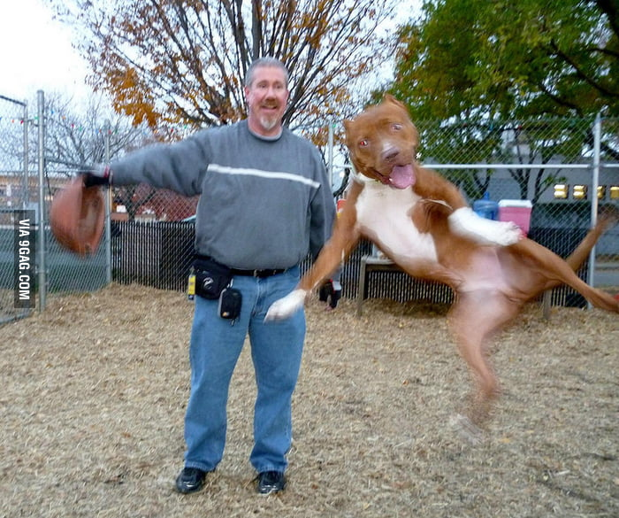 """A dog photobomb. His name is """"Merp""""."""